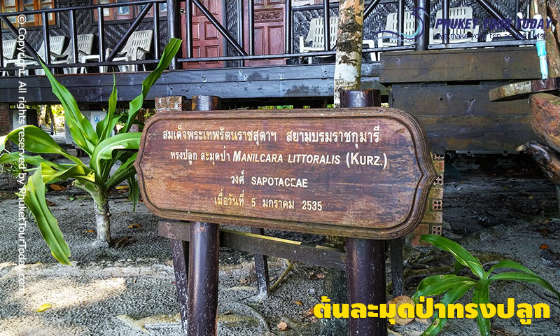 บังกะโลพัดลม เกาะสี่ สิมิลัน