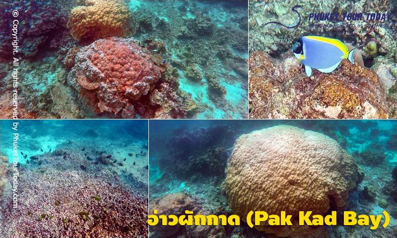 อ่าวผักกาด (Pak Kad Bay)